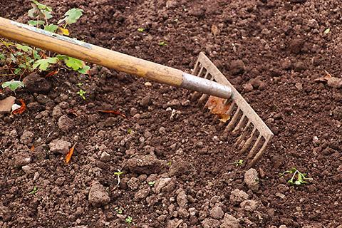 sol pour le semis du potager